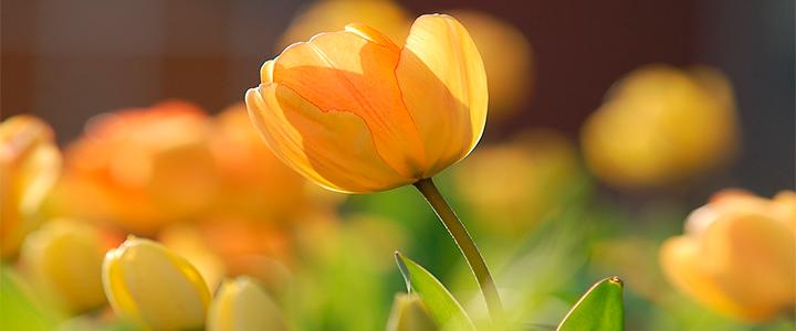 Envío de flores en día de los enamorados en logroño