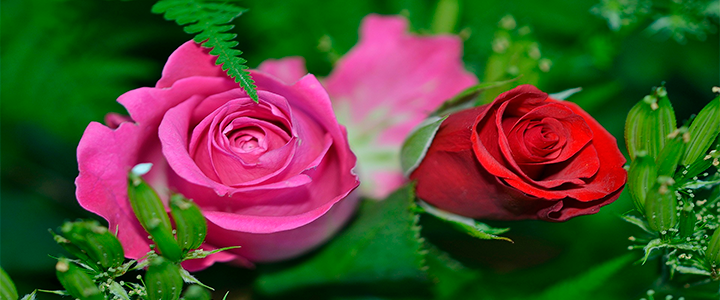 Envio de flores en san valentin